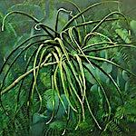 Frank Brunner: Botanisk hage I, 2001, 76 x 85 cm