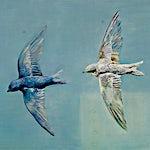 Frank Brunner: Montre med to svaler, 2001, 56 x 71 cm