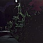 Marius Engstrøm: Hemmelig liv, 2012, 80 x 100 cm
