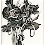 Sverre Malling: Flower/ Fritzl, 2013, 63 x 55 cm