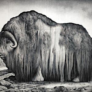 Sverre Malling: Norwegian Muskox, 2016, 180 x 263 cm