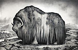 Sverre Malling, Norwegian Muskox, 2016, 180 x 263 cm