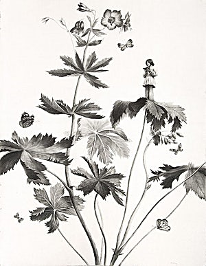 Sverre Malling, Many a blossom shall its leaves unfold #1, 2006, 76 x 57 cm