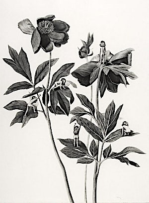 Sverre Malling, Many a blossom shall its leaves unfold #2, 2006, 76 x 57 cm