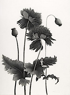 Sverre Malling, Many a blossom shall its leaves unfold #3, 2006, 76 x 57 cm