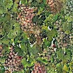 Thor Furulund: Valpolicella (detalj), 2000, 200 x 200 cm