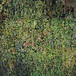 Thor Furulund: Valpolicella, 2000, 200 x 200 cm